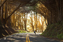 Title: Downhill Skateboard Tree Tunnel Photo Of: stock Type: Extreme Sports