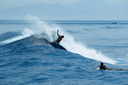 Title: Adam Cutback Surfer: Bennetts, Adam Type: Action