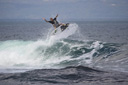 Title: Chippa Frontside Punt Surfer: Wilson, Chippa