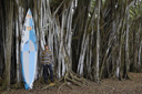 Title: Jamie with Board Surfer: Mitchell, Jamie Type: Portraits