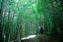 Title: Through the Woods Location: Chile Photo Of: stock Type: Lifestyle
