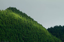 Title: Azores Mountain Trees Location: Alaska Photo Of: stock Type: Landscapes