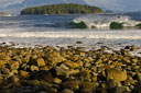 Title: Tofino Lineup Location: Canada Photo Of: stock Type: Lineups