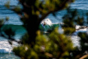 Title: Fanning Between the Trees Location: Australia Surfer: Fanning, Mick Type: Action