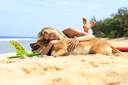 Title: Rosy Hugging Dog Location: Hawaii Surfer: Hodge, Rosy Type: Portraits
