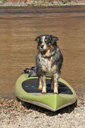 Title: Dog and Paddle Board Location: Nevada Photo Of: stock Type: Sea Life Wildlife