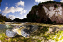 Title: Turtle Against the Bottom Photo Of: stock Type: Sea Life Wildlife