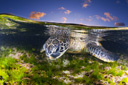 Title: Turtle and Sunset Photo Of: stock Type: Sea Life Wildlife