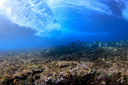 Title: Shallow Reef Wave Location: Hawaii Photo Of: stock Type: Underwater