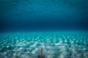 Title: Underwater Relaxation Photo Of: stock Type: Underwater